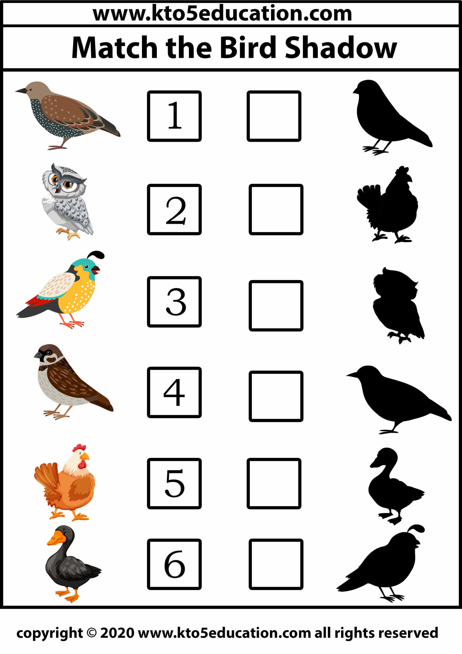 Match The Bird Shadow 3