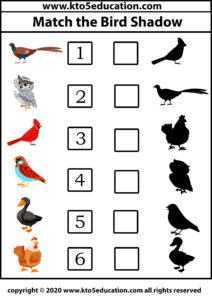 Match The Bird Shadow 4