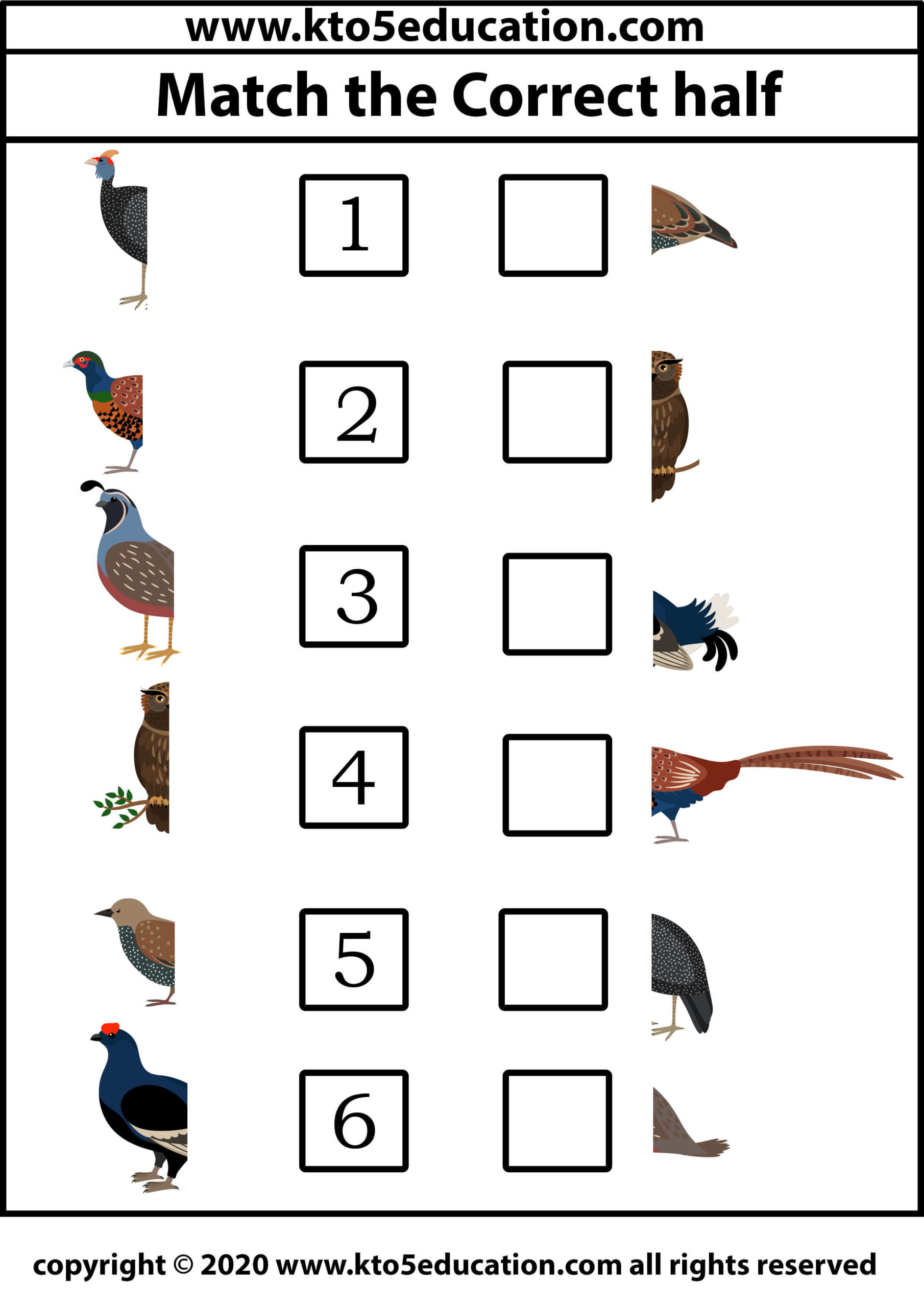Match the Correct half Bird Worksheet 4