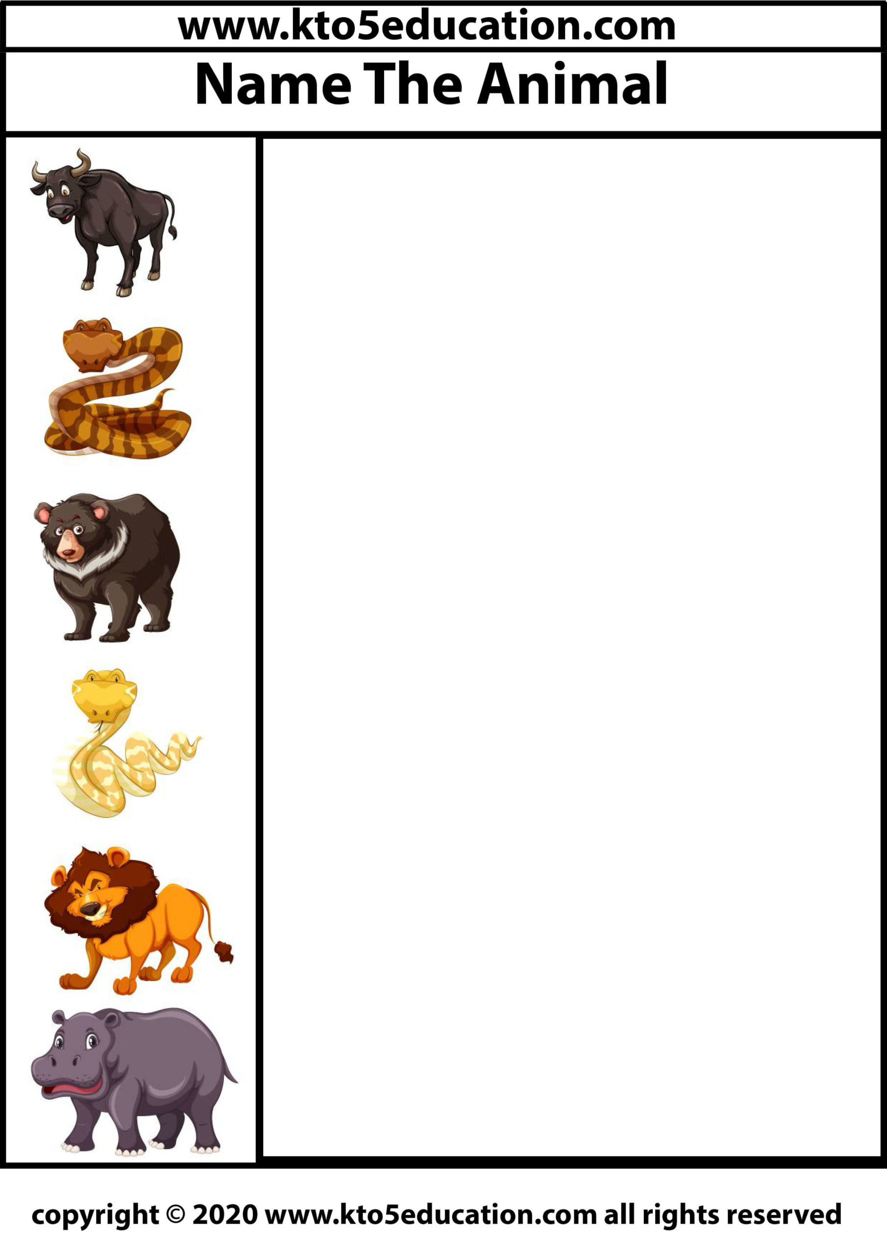 Write the name of the Animal Worksheet 3
