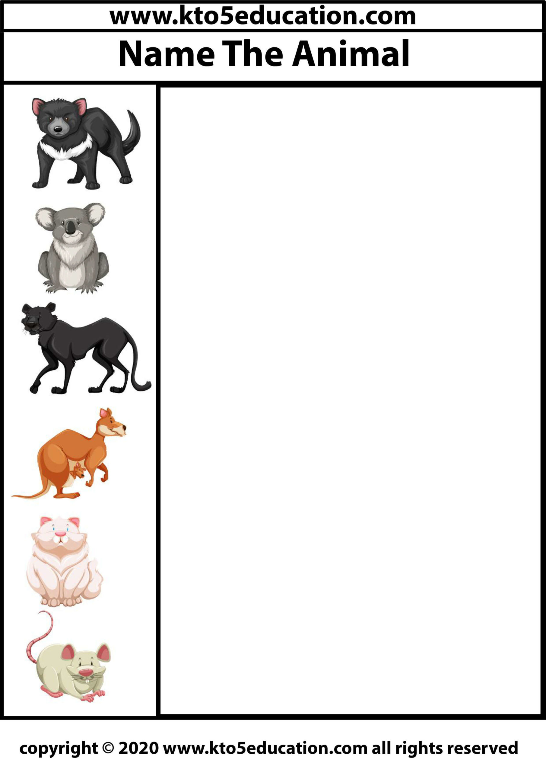 Write the name of the Animal Worksheet 5
